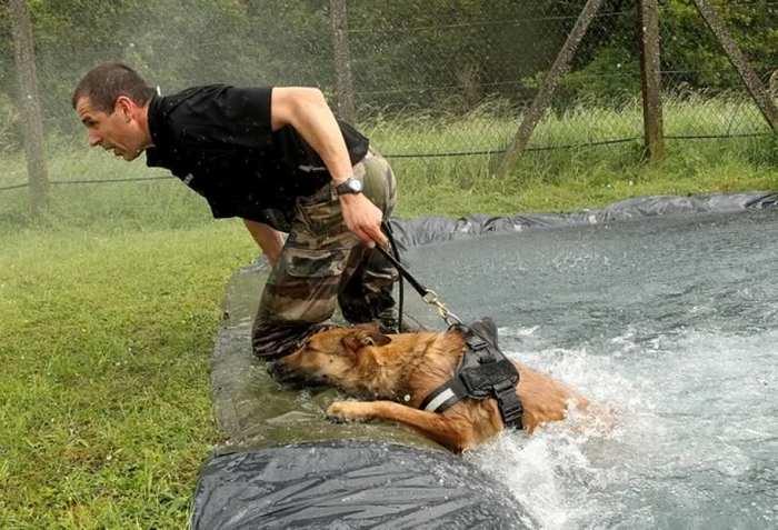 """alt=""""guia canino en el CNICG"""""""