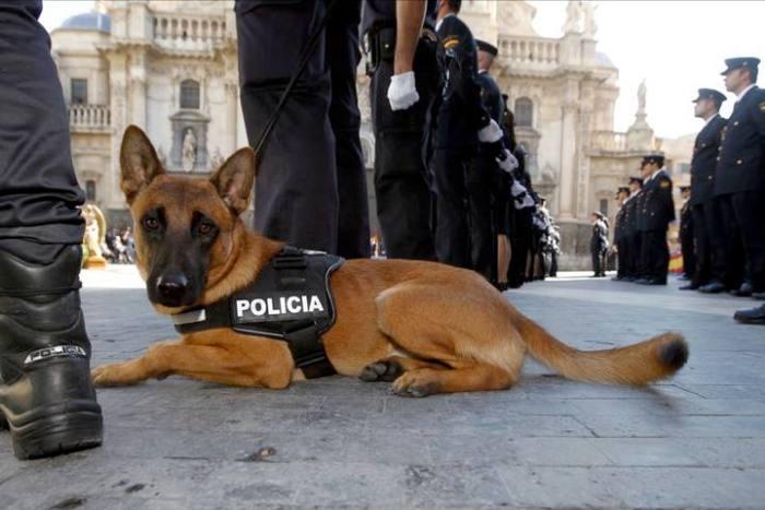 """alt=""""perro desfila en día policía Nacional"""""""
