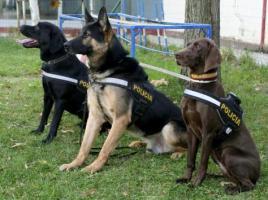 """alt=""""medallas para los perros policía"""""""