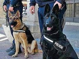 "alt=""denuncian maltrato perros policía Galapagar"""