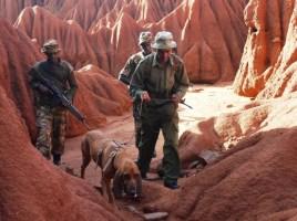 "alt=""perros detectores protegen rinocerontes en Kenia"""