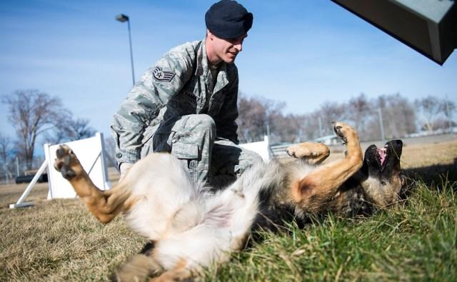 """alt=""""perro militar juega"""""""
