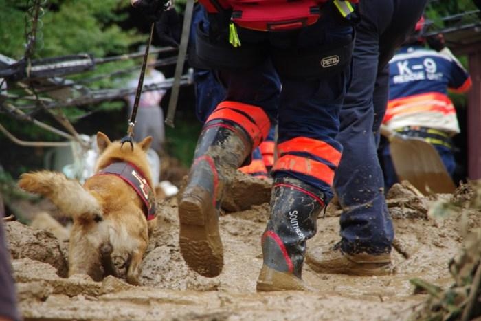 Código ético del guia canino de perros de rescate