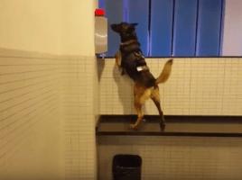 RCD Espanyol perros detectores