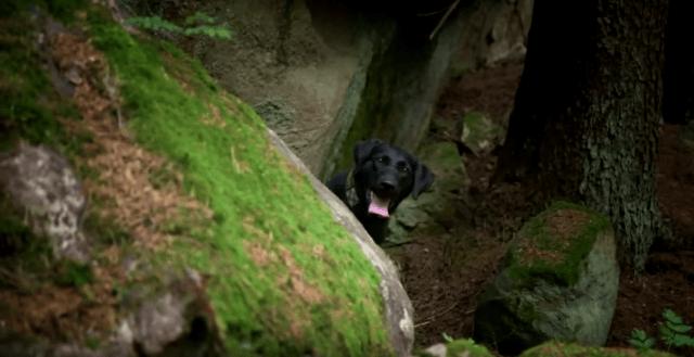 buscando drogas en el bosque