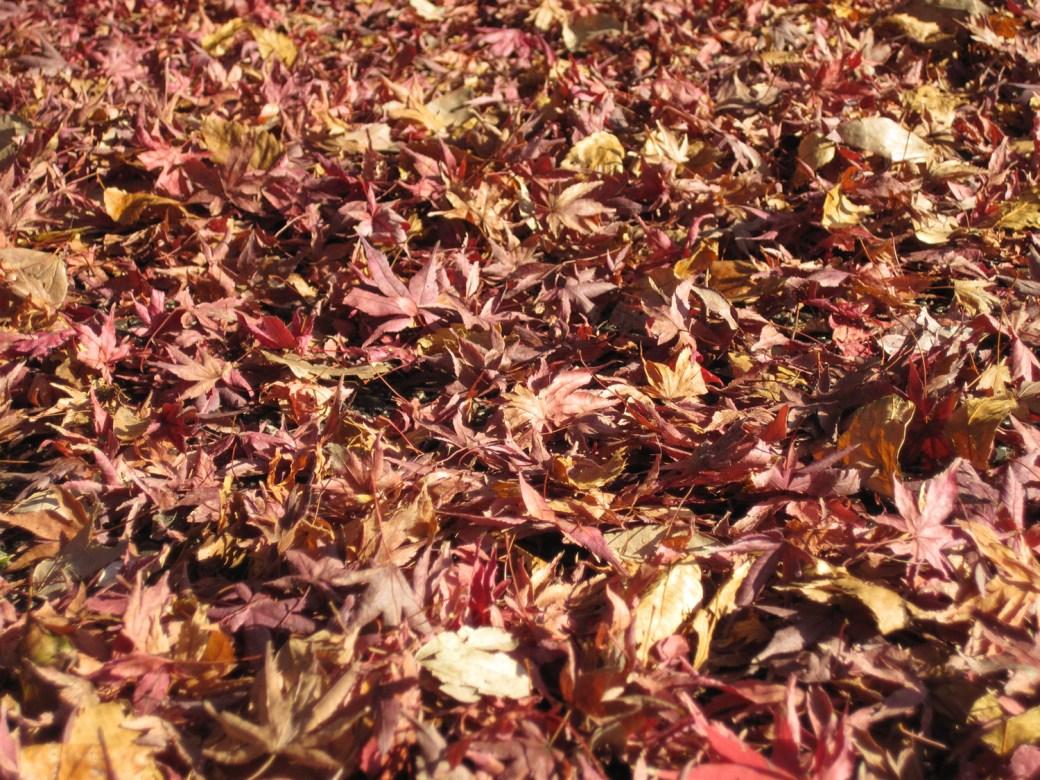 Los colores del otoño en el Palacio Imperial de Tokio
