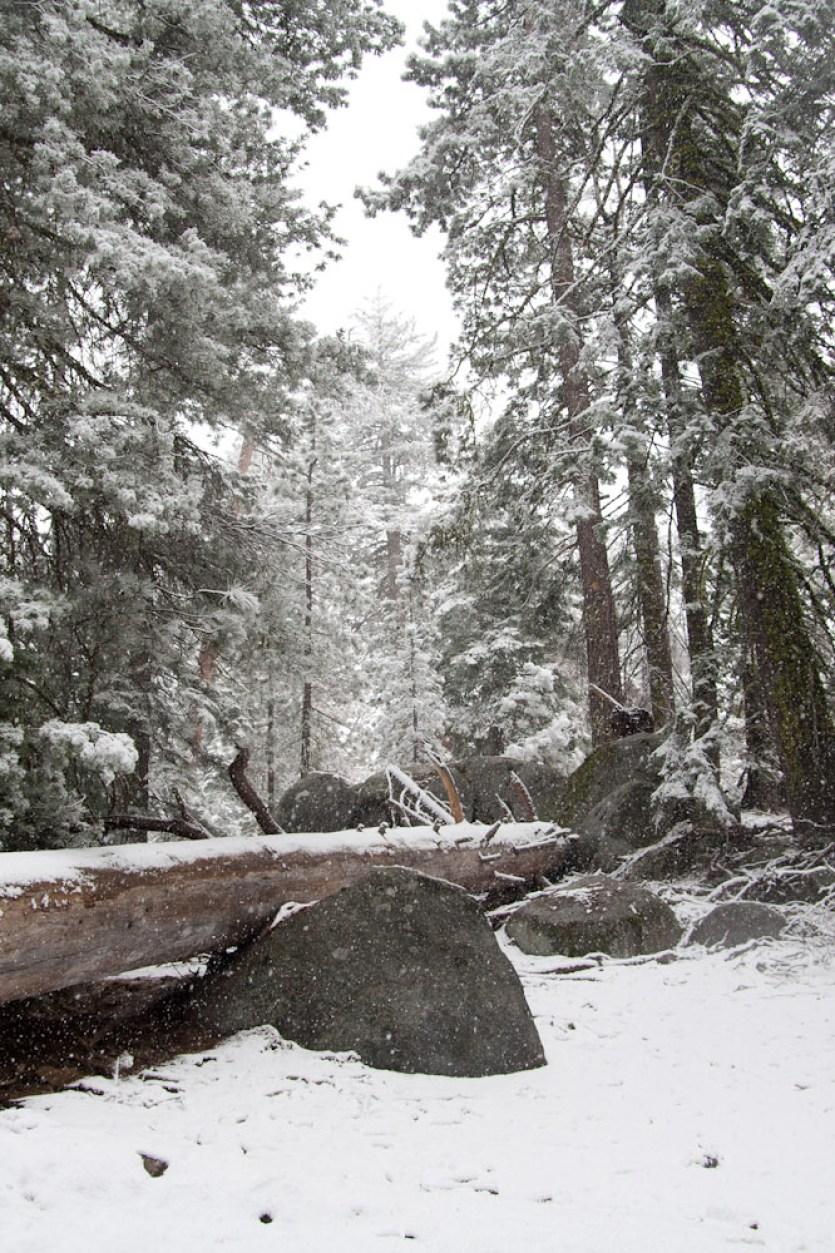 El sendero Sherman Trail totalmente nevado, en el Parque Nacional de las Secuoyas, EE.UU.