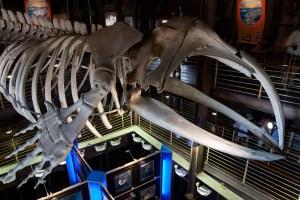 Esqueleto de ballena en la entrada del acuario uShaka, Durban, Sudáfrica