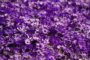 Fotos de la semana Nº 9, febrero-marzo 2012: el colorido mundo de las flores