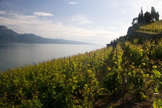 Viñedos, lago Léman y Francia, vistos desde Rivaz, Suiza