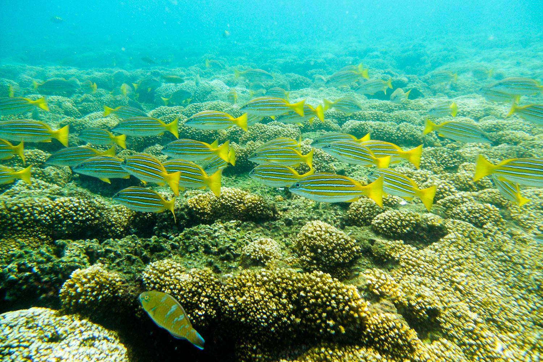 Arrecife de coral de bahía Damas, isla Coiba, Panamá