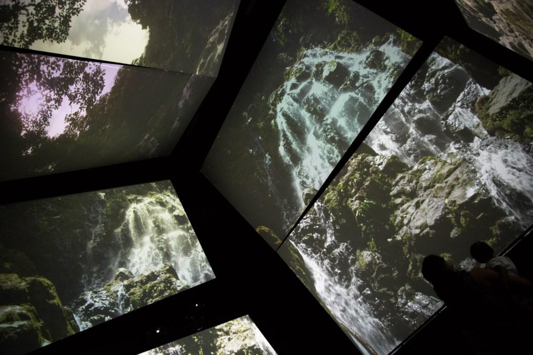 Panamarama, una detallada presentación audiovisual sobre los ecosistemas panameños