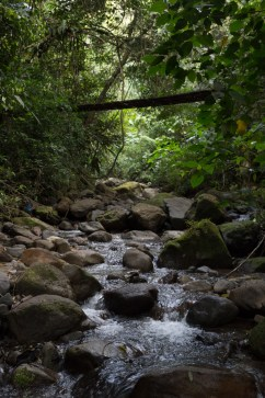 Viernes 31: Un puente de madera sobre un arroyo cerca del Chorro Macho, en El Valle de Antón, Panamá.