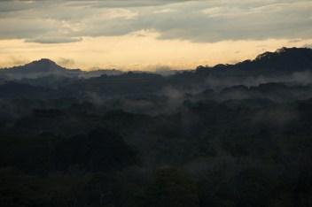 Fotos de la semana Nº5, 2014: De lo que pasa en el bosque lluvioso tropical