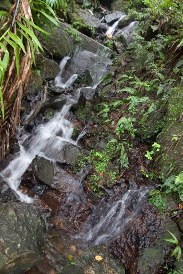 Jueves 30: Una pequeña cascada en el bosque nacional El Yunque, en Puerto Rico.
