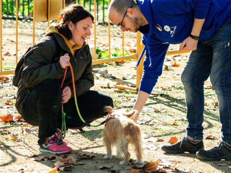 Educación Canina - Adiestramiento
