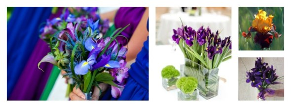Collage iris
