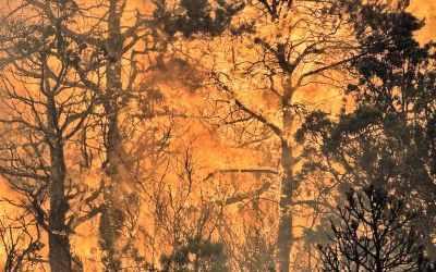 دهکده لیتون، بریتیش کلمبیا در آتش سوخت