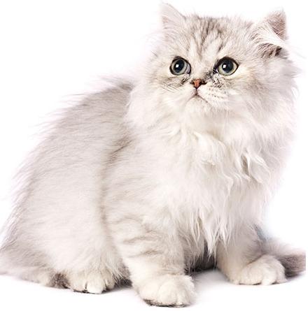 Come, quando e perchè si spazzolano i gatti