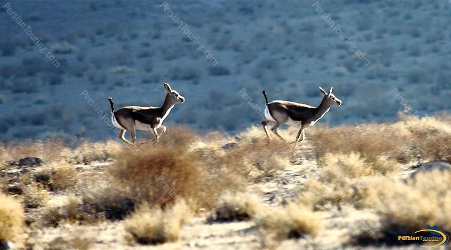 kolah-ghazi-national-park-2