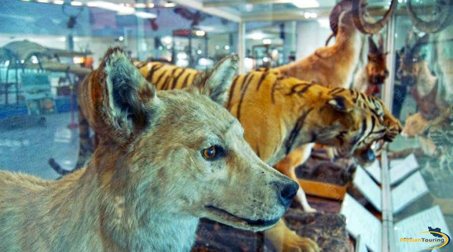 natural-history-and-technology-museum-1