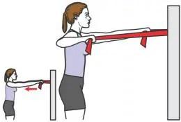 muscler haut dos