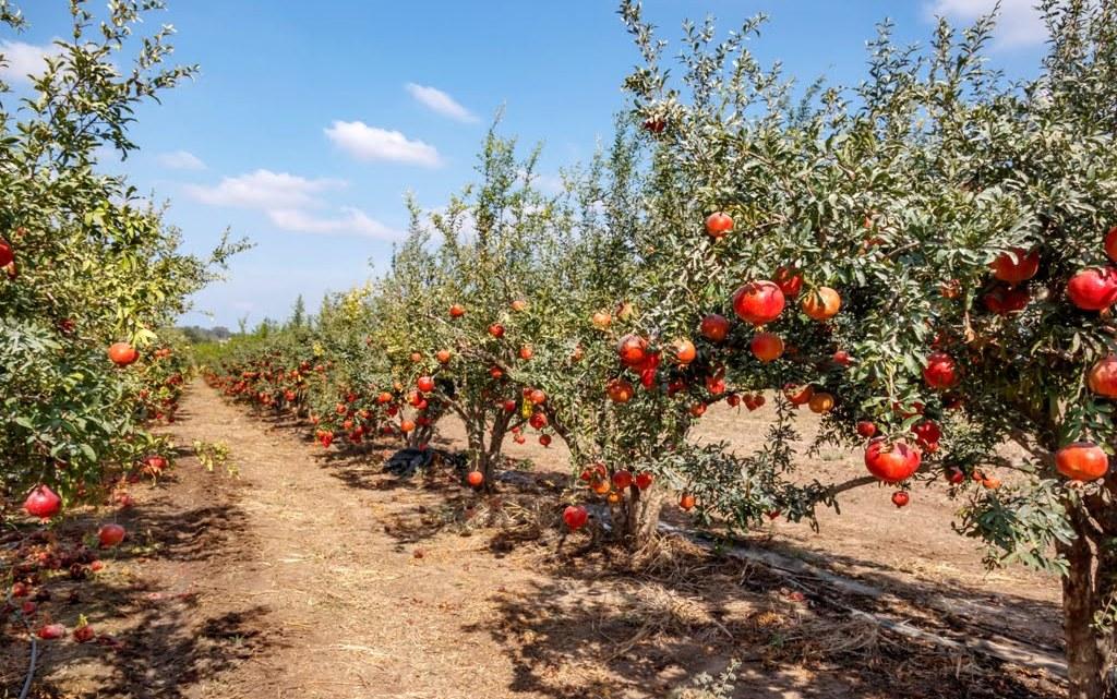 """Arriva il """"Bosco Peroni"""": il regalo di Natale di Birra per l'ambiente"""