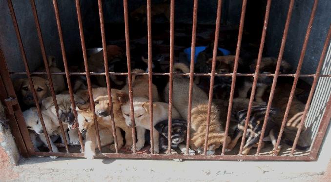 Traffico di cuccioli. Commerciante di animali condannato a 15 mesi