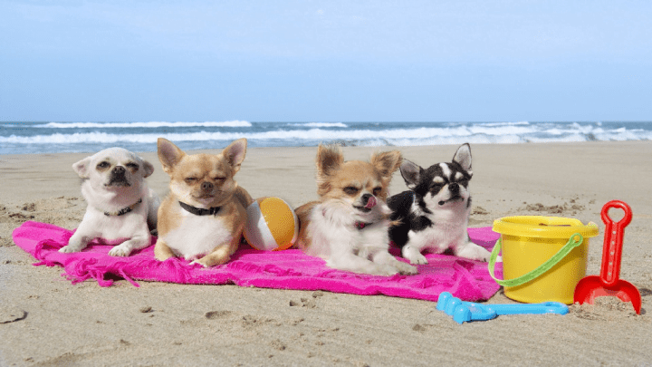 Estate e animali: Spiagge animal friendly