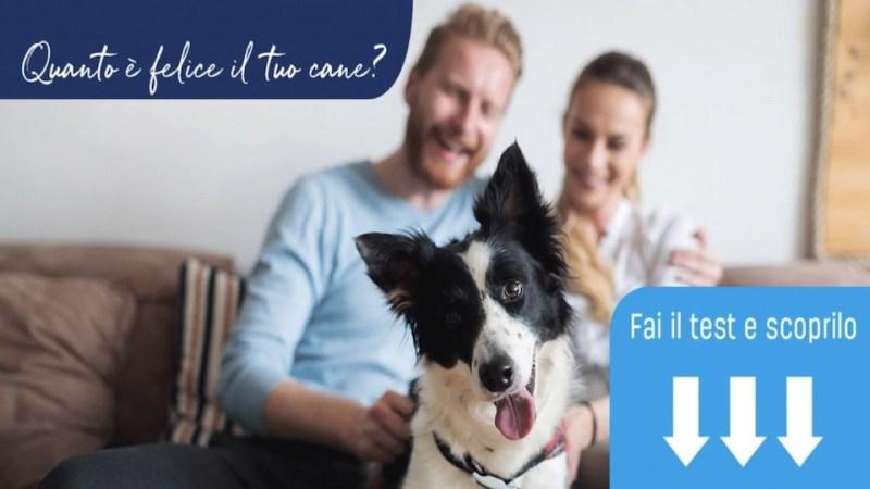 Quanto è felice il tuo cane? Fai il quiz e scoprilo…