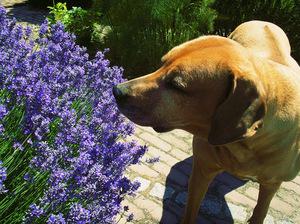 St Louis Dog Training Dog Walking