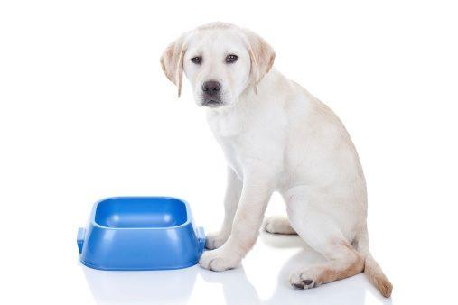 St Louis Dog Training