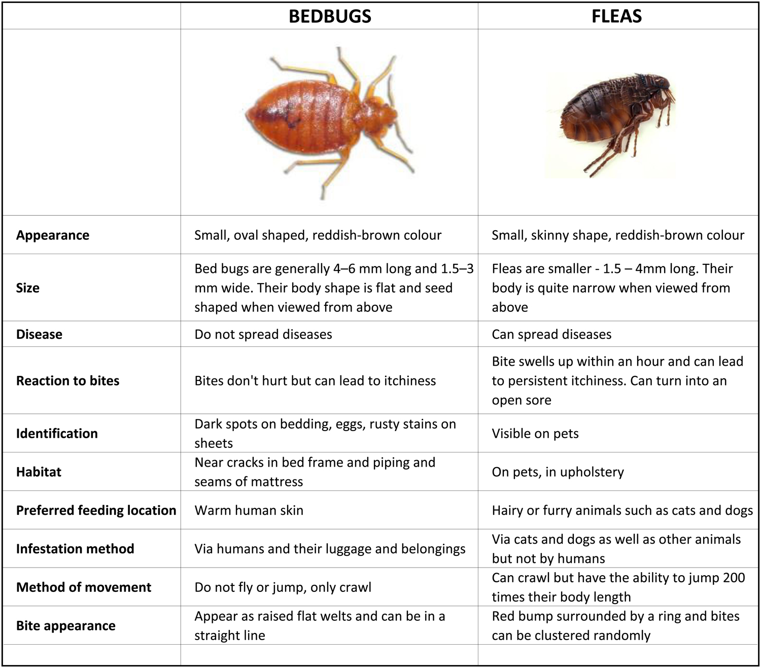 Wooden bed frames - Bed Bugs How To Get Rid Of Bed Bugs Bed Bugs In Perth