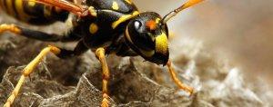 wasps nest swindon