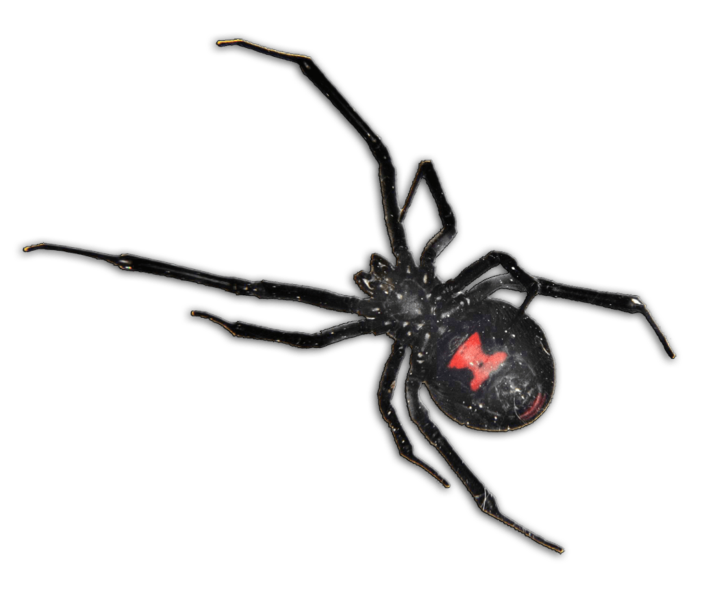 Scary Black Widow Spider Cartoon