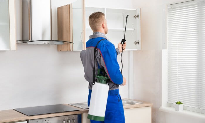 Pest Control for Kitchen