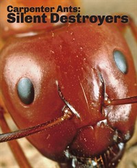 Carpenter Ants: Silent Destroyer