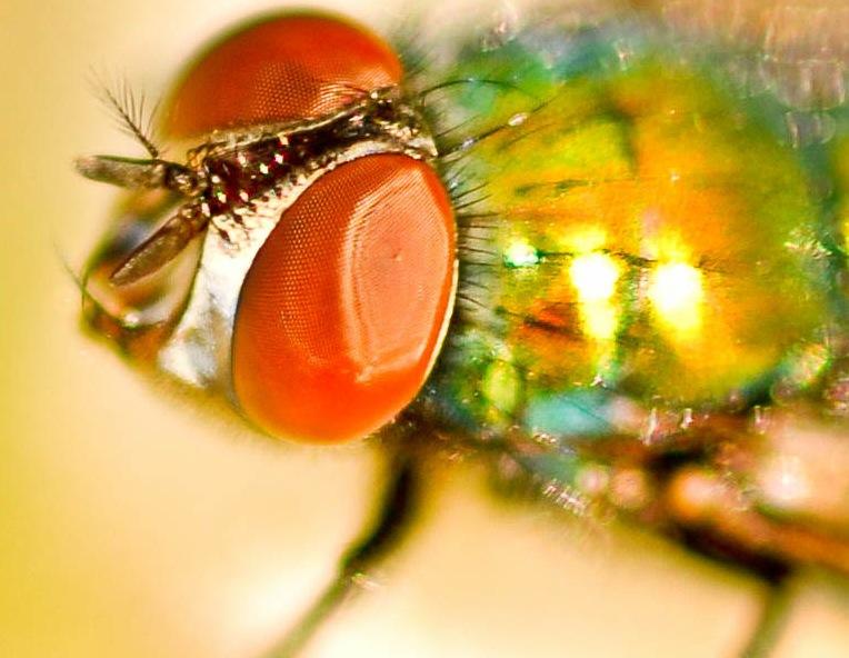 Bug Biology