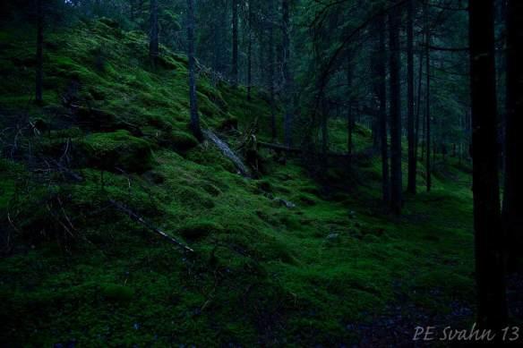 Skog i skymningstid: Kamerahus: NIKON D800 Objektiv: VR Zoom 24-120mm f/4G IF-ED Brännvidd: 24mm,   Bl: 4 Slutartid:2, ISO: 400