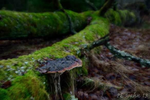 Ticka på fallet träd: Kamerahus: NIKON D800 Objektiv: VR Zoom 24-120mm f/4G IF-ED Brännvidd: 48mm,   Bl: 4 Slutartid:1/100, ISO: 400