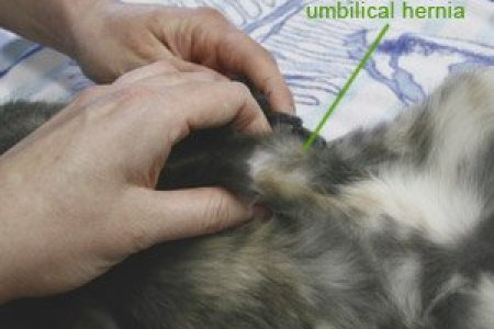 dog spaying surgery everything you need to know about spaying a dog news archives page of withy grove vets after surgery care for cats postoperative care