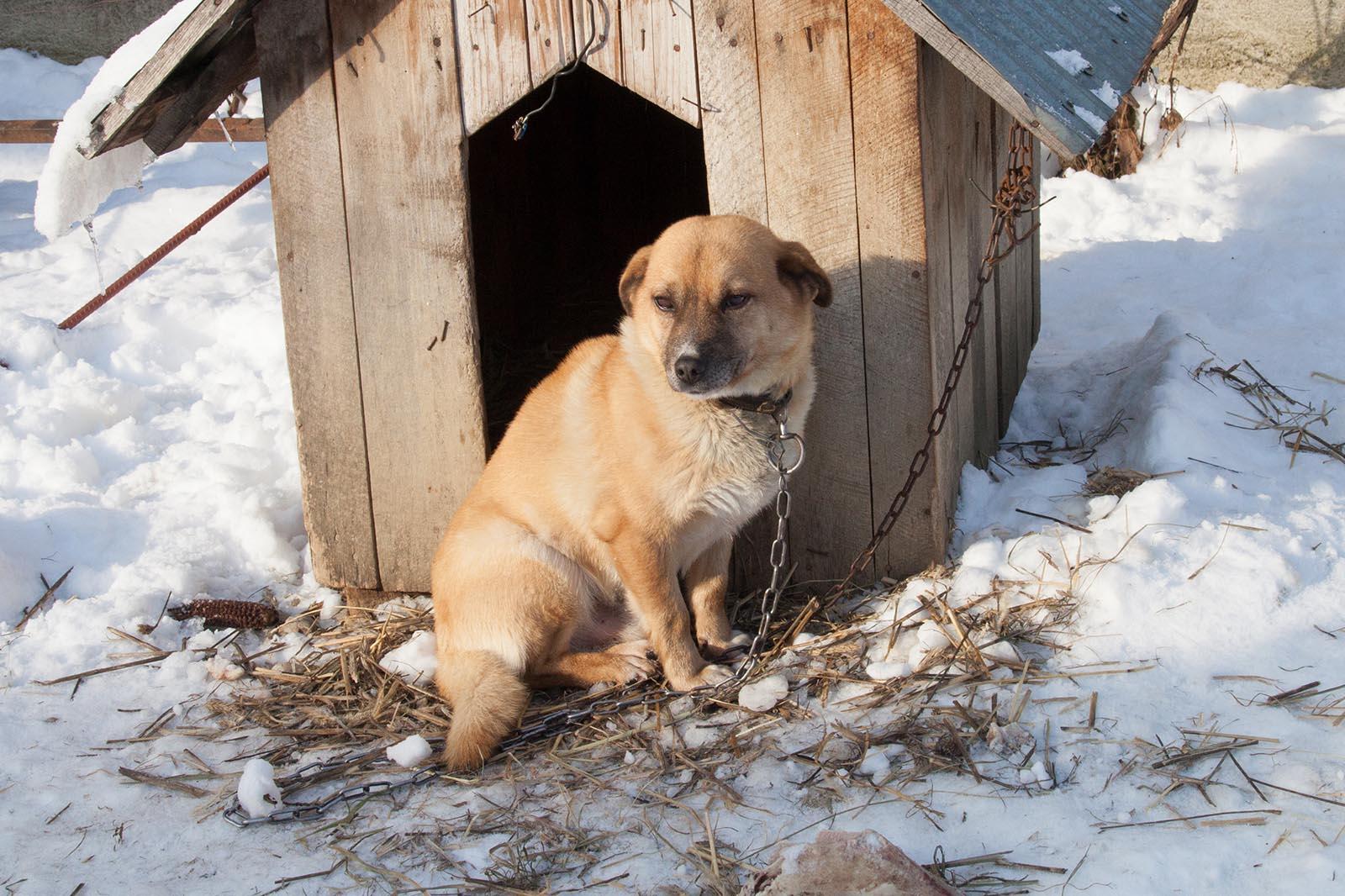 hund rumaenien winter