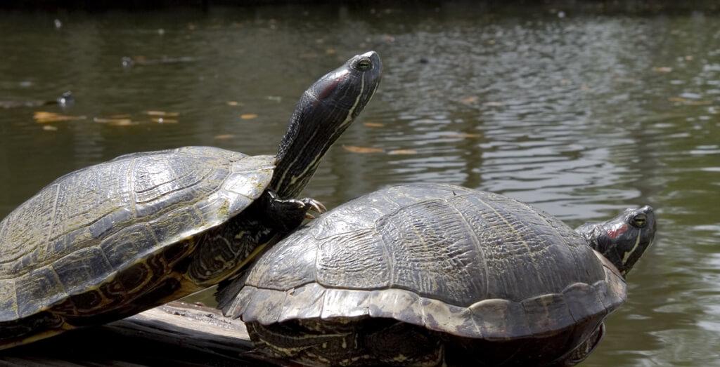 Happy Turtles (1)