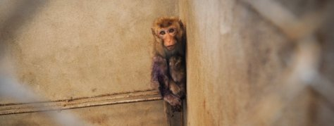 MonkeyBreeding3_Laos-2385
