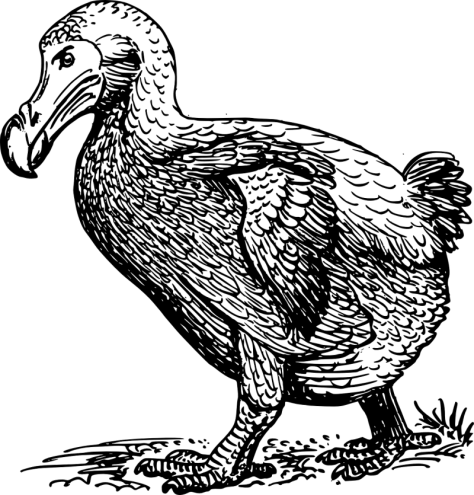dodo-47981_1280