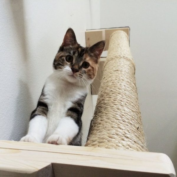 Vertical Sisal Cat Climbing Pole by CatastrophiCreations