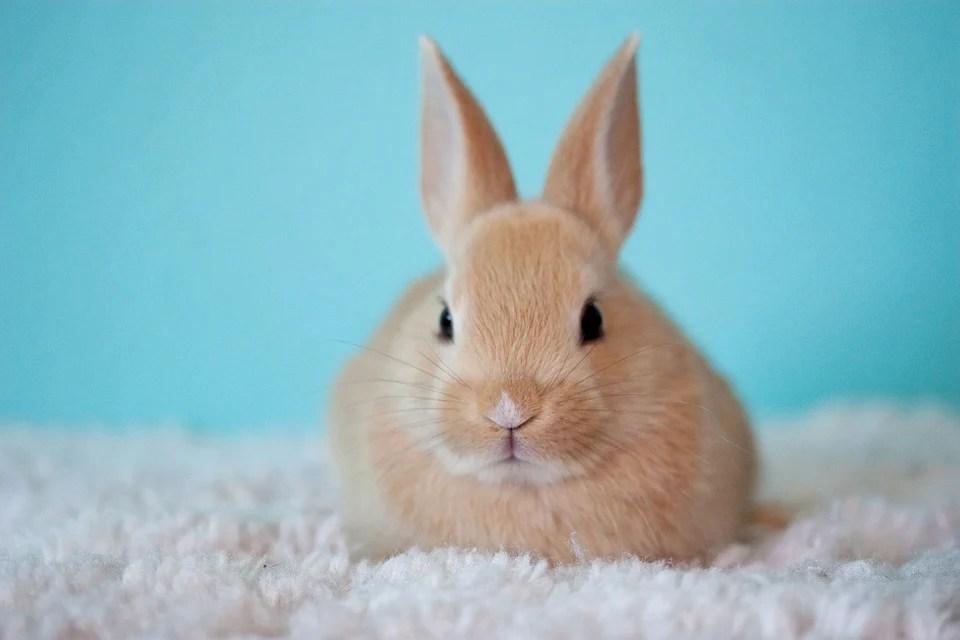 9 Reasons Why You Shouldn T Buy A Bunny Save Animals Peta Kids