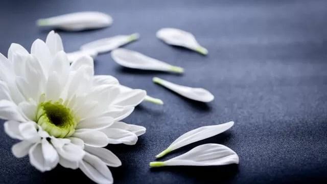 黒背景に花