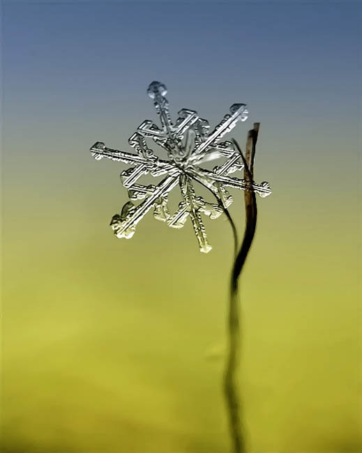 Ethereal Macro Photos of Snowflakes in the Moments Before They Disappear macrosnow 3