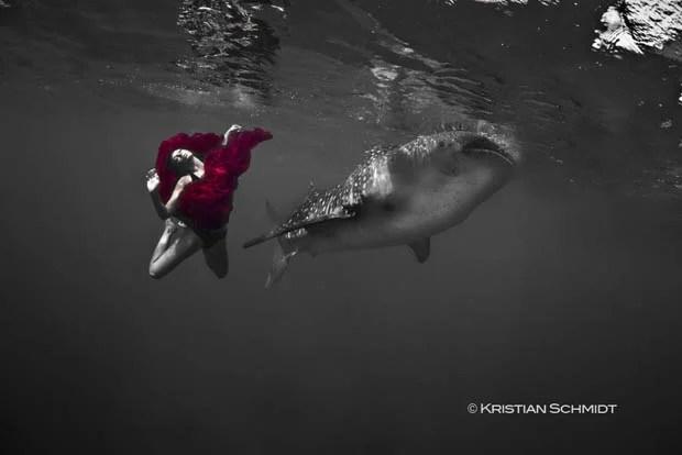 An Underwater Fashion Shoot Featuring a Whale Shark whalesharkfashionshoot 2